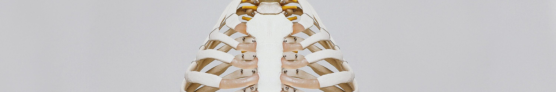 skelett med ben